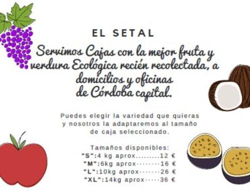 CAJAS DE FRUTA Y VERDURA ECOLÓGICA. SEMANA 39.