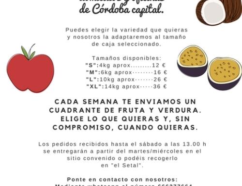 SERVICIO DE CAJAS DE FRUTA Y VERDURA ECOLÓGICA A DOMICILIO