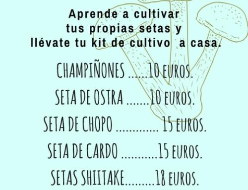 KITS DE CULTIVO DE SETAS